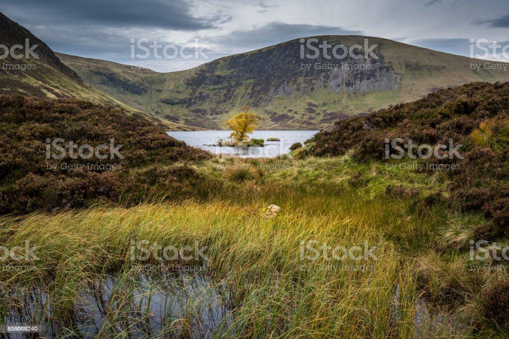 Lone tree in Loch Skeen stock photo