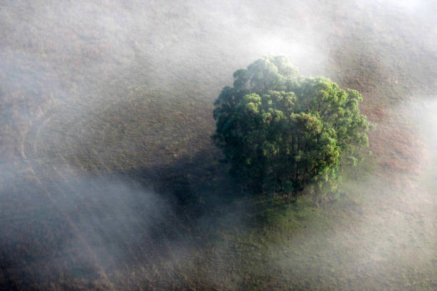 lone tree in misty field - resilience concept stock photos and pictures