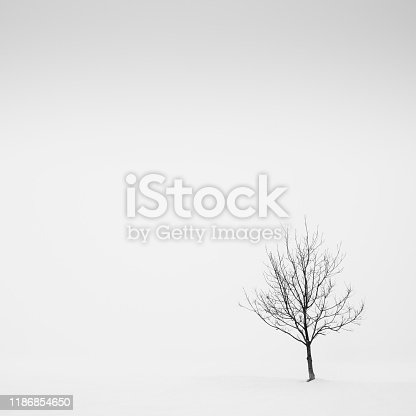 477312602istockphoto Lone tree in the fog in a snow field, Parma, Italy 1186854650