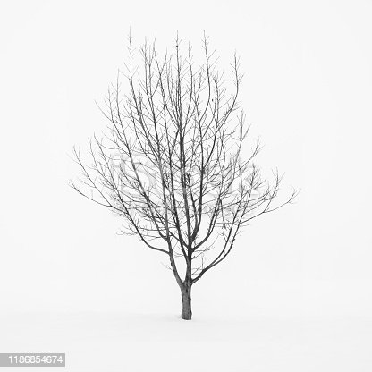 477312602istockphoto Lone tree in the fog in a snow field, Parma, Italy 1186854674