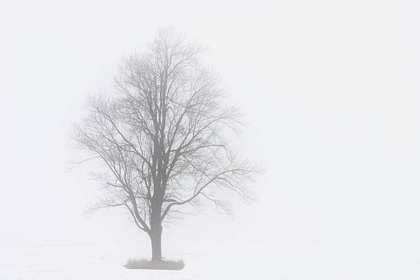 Lone Tree in the Fog stock photo