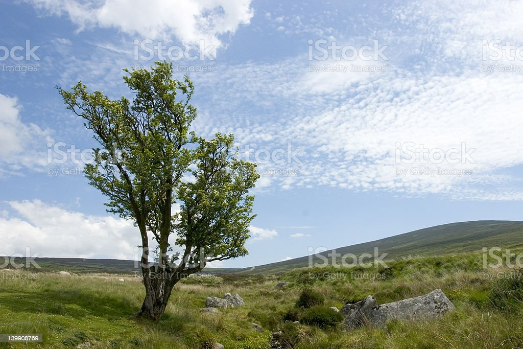 Lone tree in the hills stock photo