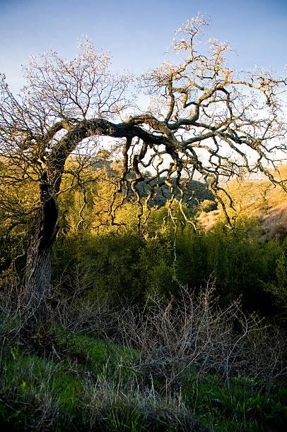 lone tree, mitten im winter und herbst farben - mark tantrum stock-fotos und bilder