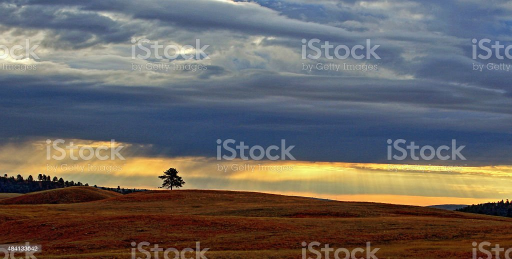 Lone Tree in Wind Cave National Park stock photo