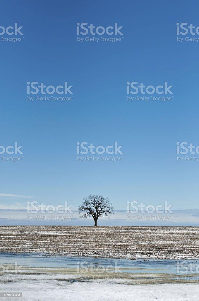 Arbre d'hiver solitaire dans un champ avec un ciel bleu photo libre de droits