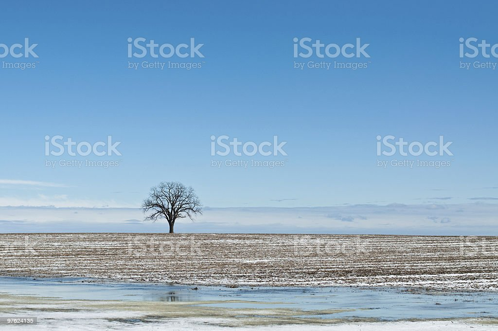 Lone Tree in Winter Field with Blue Sky royalty-free stock photo
