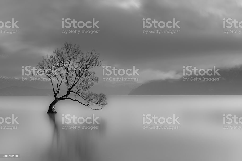 Lone tree, Lake Wanaka, New Zealand (black and white) stock photo