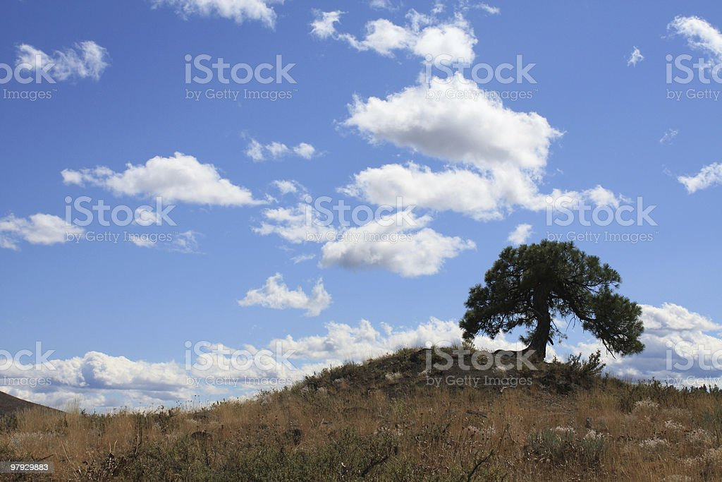 Lone Tree on a Hill royalty-free stock photo