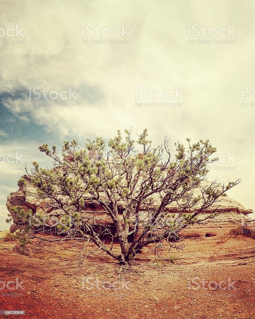 Lone tree on a mountain foto royalty-free
