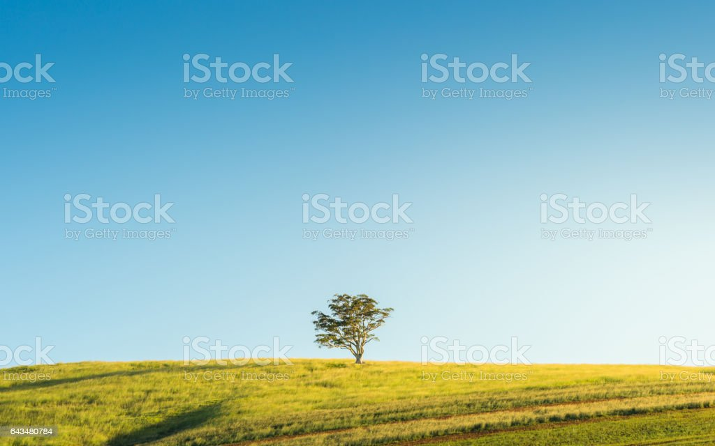 Lone Tree on Grassy Hill stock photo