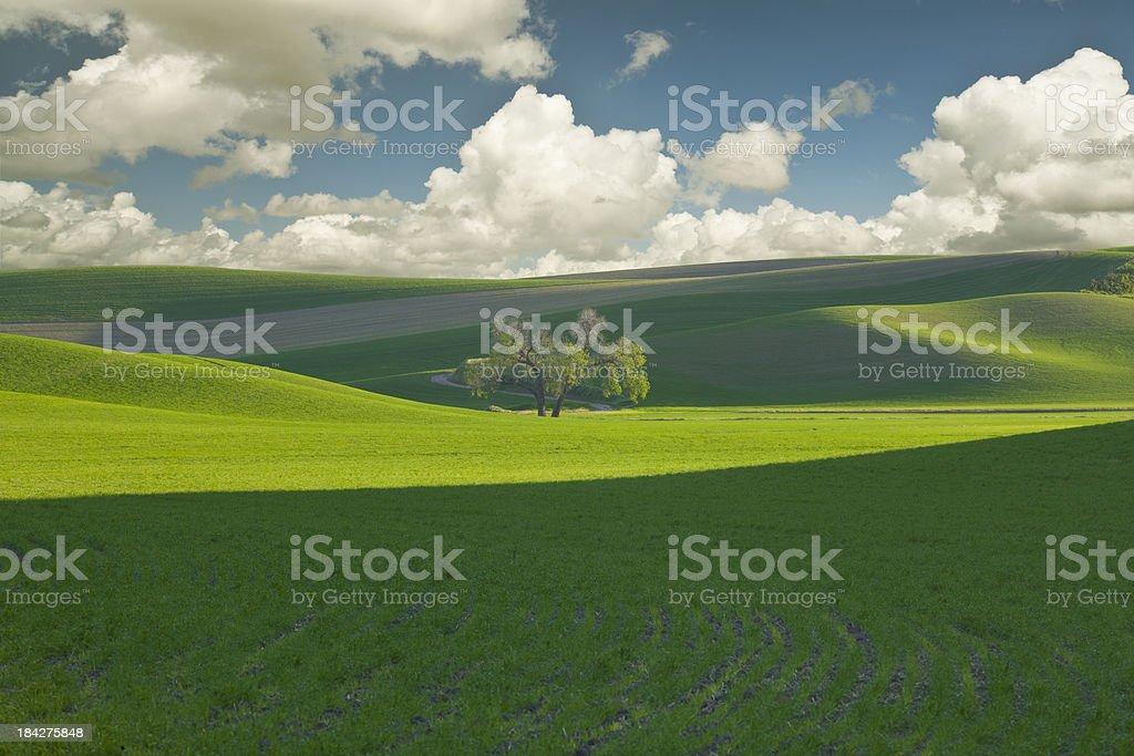 Lone tree on the Palouse royalty-free stock photo