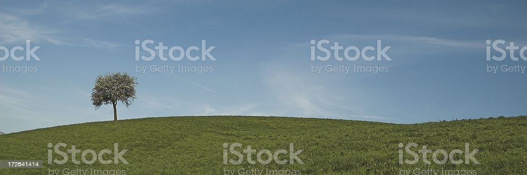 Lone tree on the top of the hill royalty-free stock photo