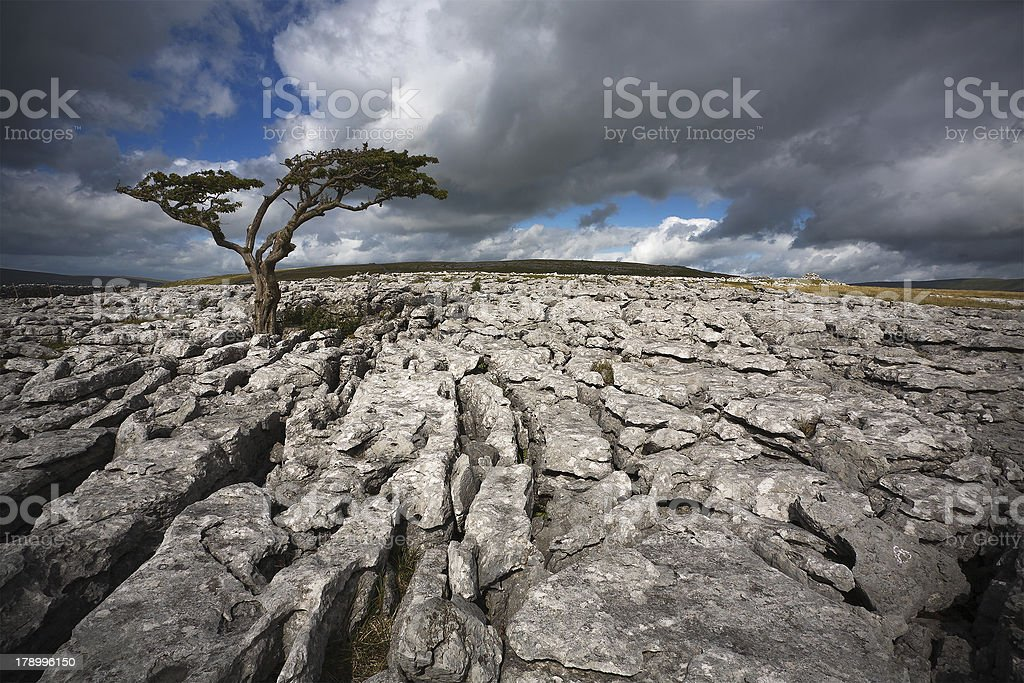 Lone tree on Twistleton Scar stock photo