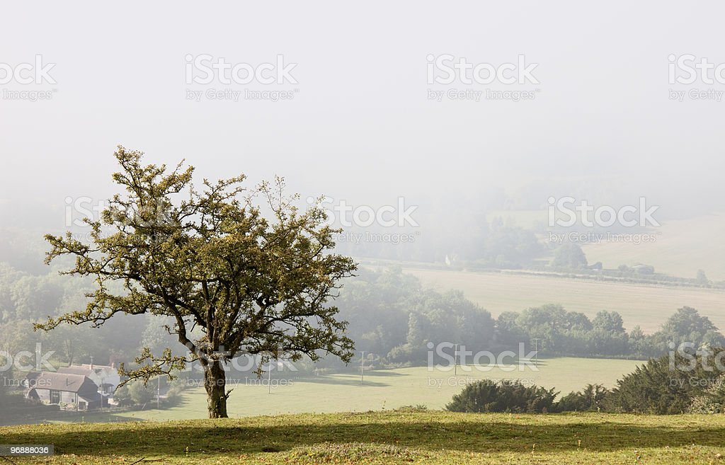Lone tree overlooking a misty valley in autumn royalty-free stock photo