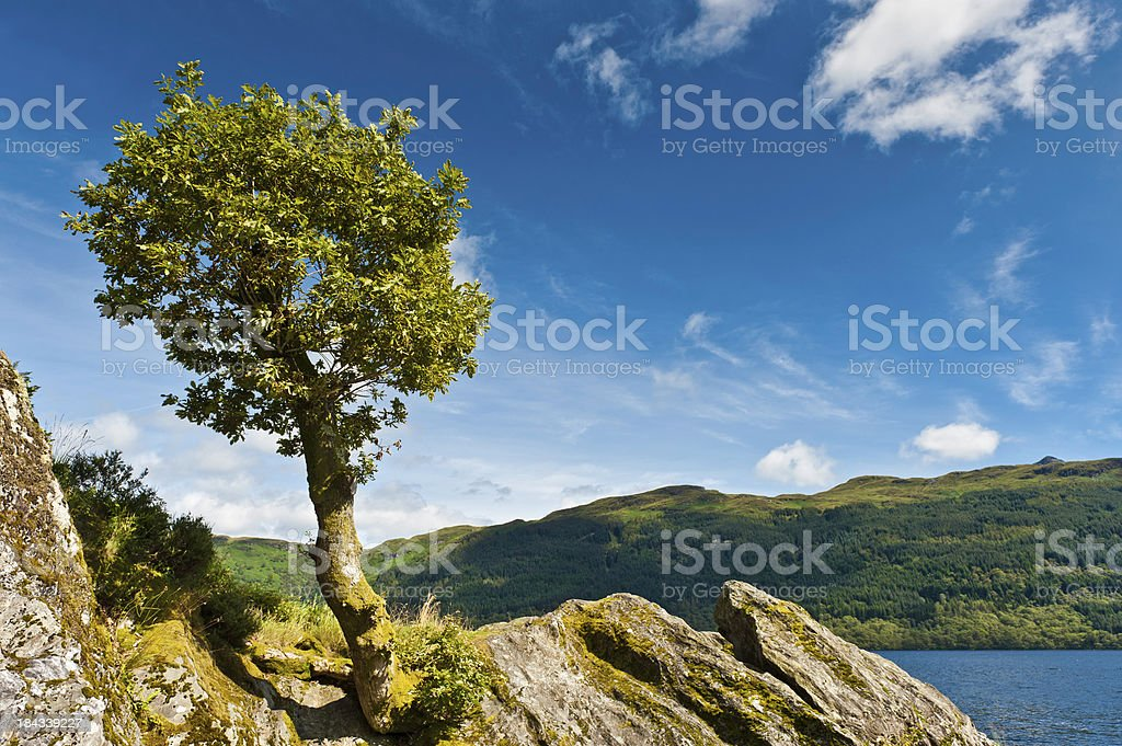 Lone tree overlooking idyllic lake summer mountains royalty-free stock photo