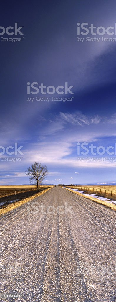 Lone Tree Panoramic Vertical royalty-free stock photo