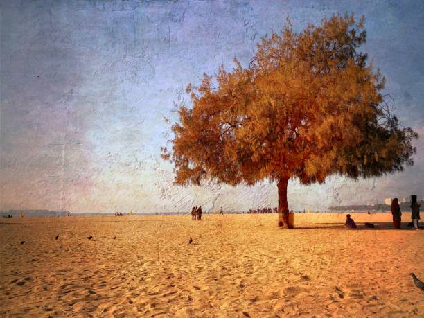 Árvore solitária - foto de acervo