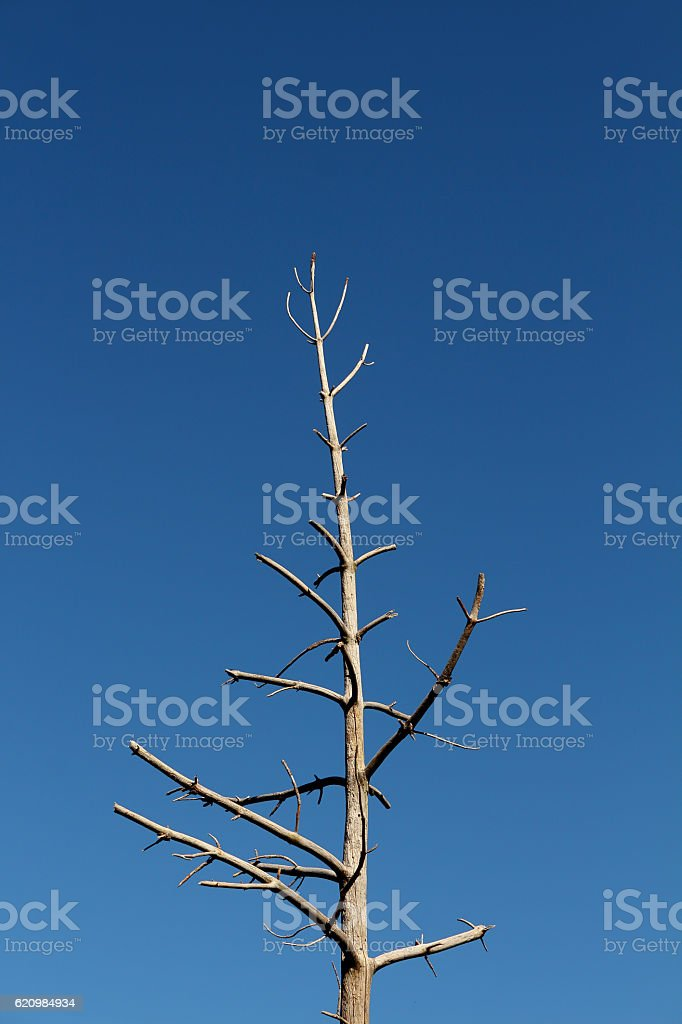 Lone tree  foto royalty-free