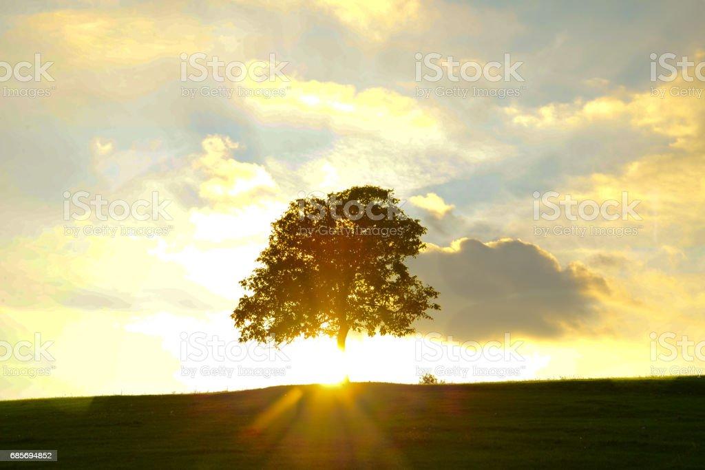 Lone tree Lizenzfreies stock-foto