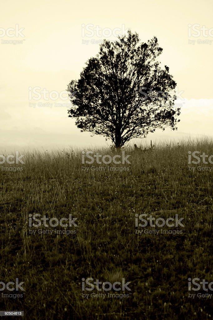 Lone Tree (1) royalty-free stock photo