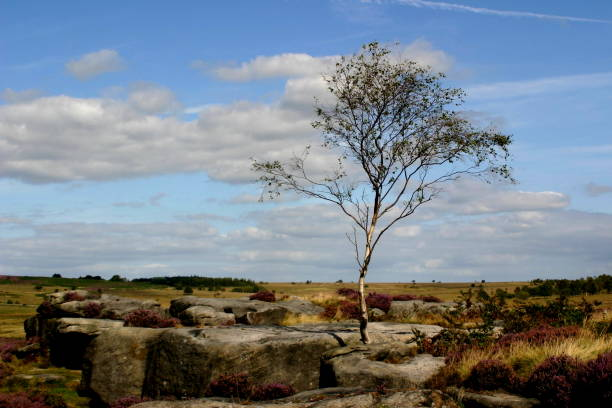 Lone Tree – Foto