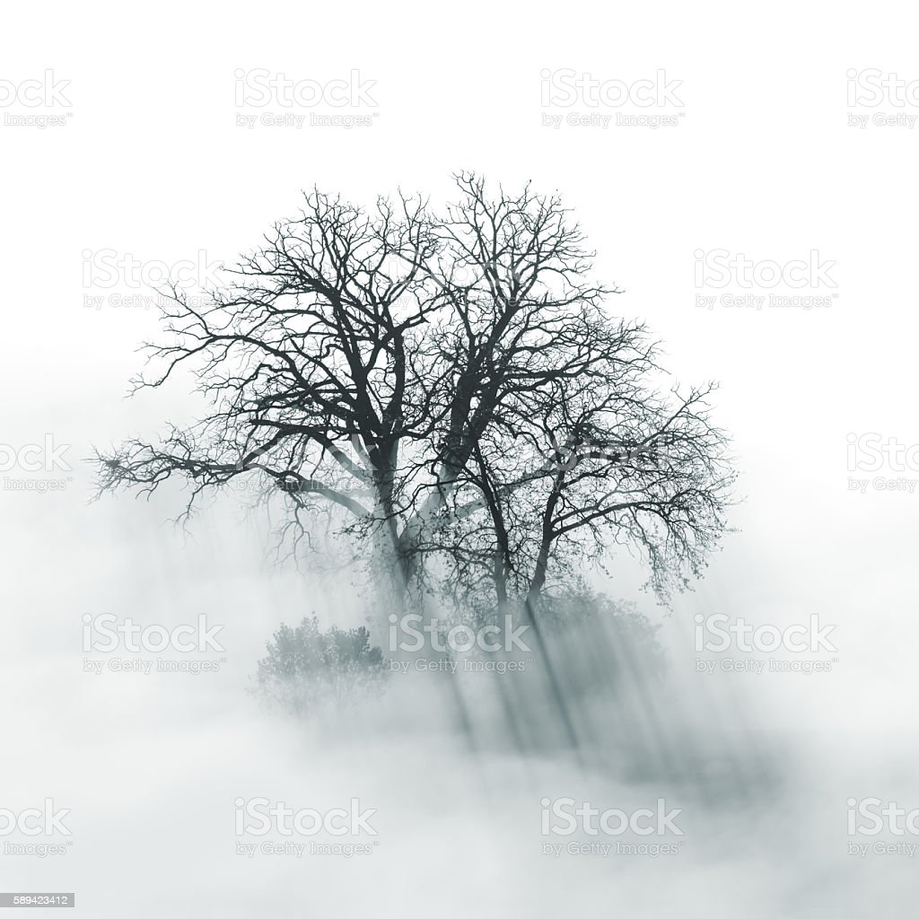 Lone Tree silhouette in foggy morning - Photo