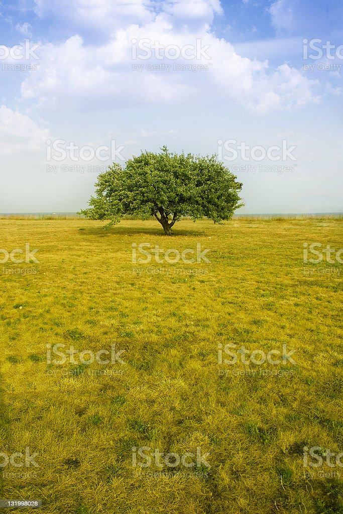 Lone tree summer landscape royalty-free stock photo