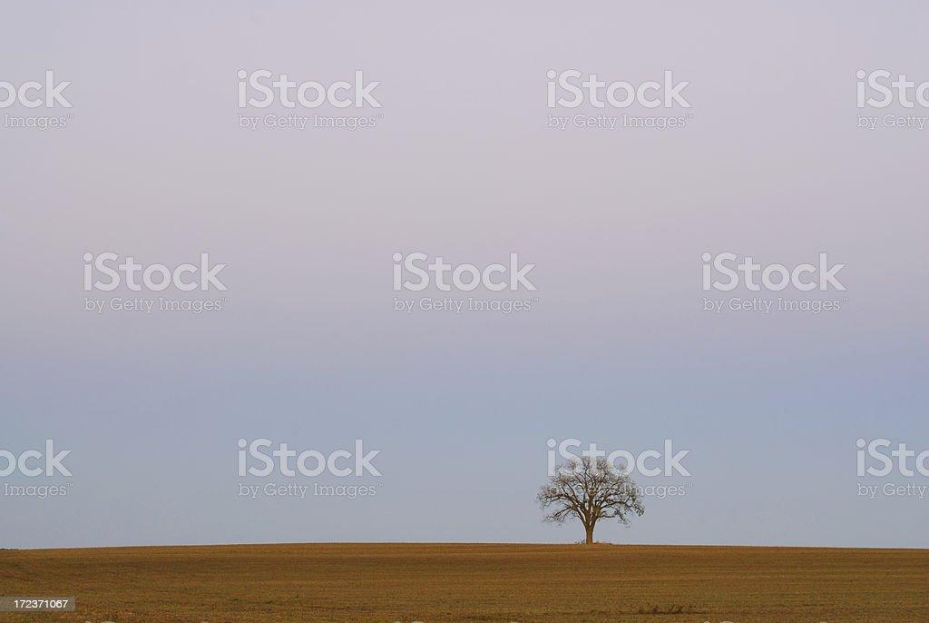 Lone Tree Under Smog stock photo