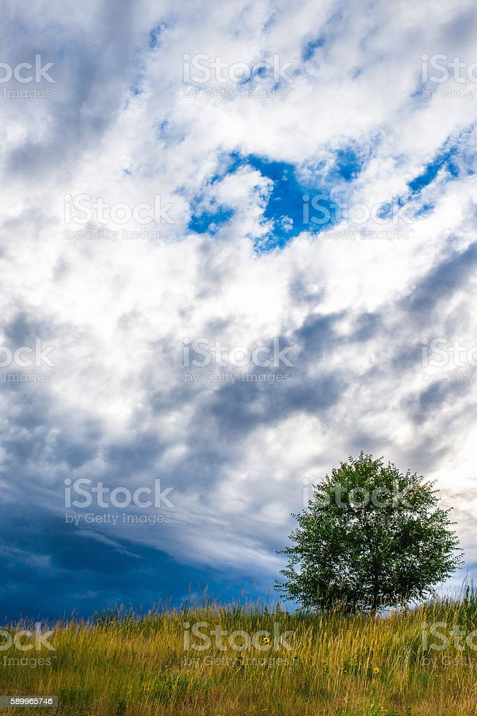 Lone tree under stormy cloudy skies stock photo
