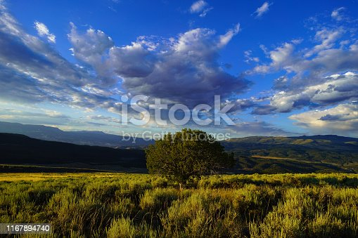 Lone Tree Wide Angle Landscape in Sage Meadow - Scenic mountain views with clouds and big sky with lone tree as central theme.