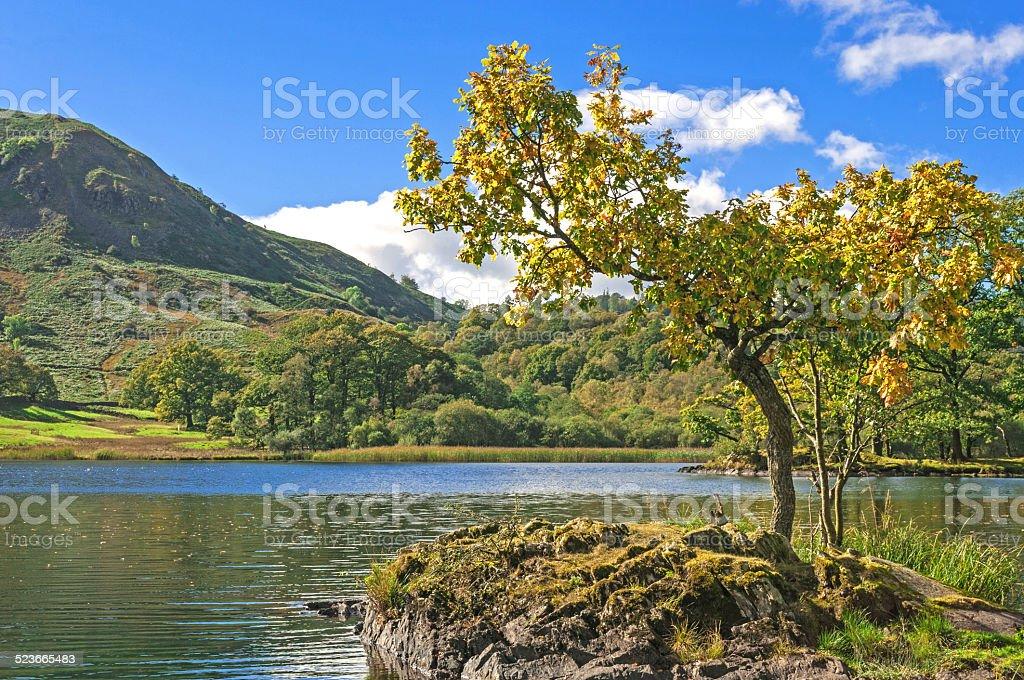 Lone Tree,Lake and Mountain stock photo