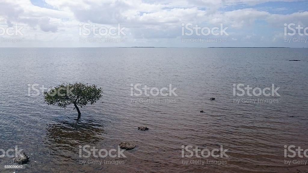 Lone Water Tree stock photo