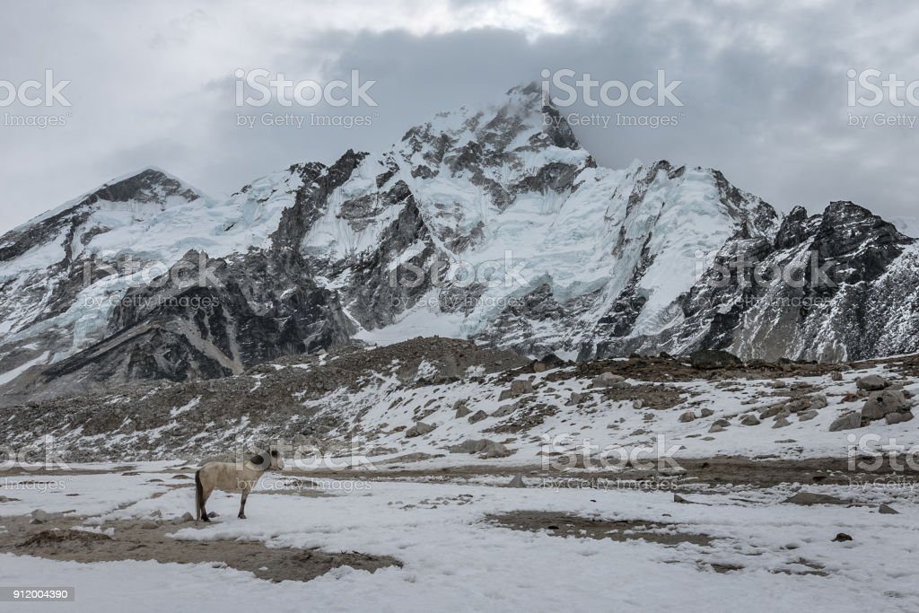 Lone white horse standing in the cold at Mount Everest basecamp stock photo