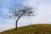 Single tree in lawn