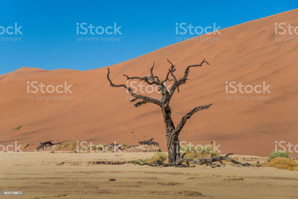 Lonely and dead tree in Deadvlei stock photo