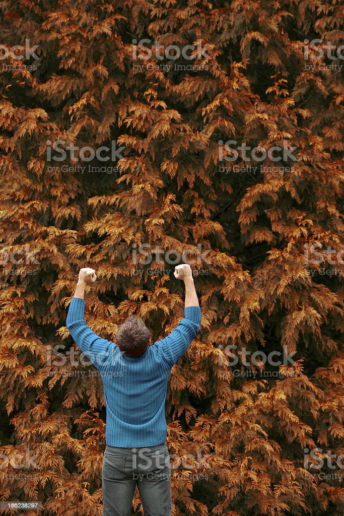 Lonely Autumn royalty-free stock photo