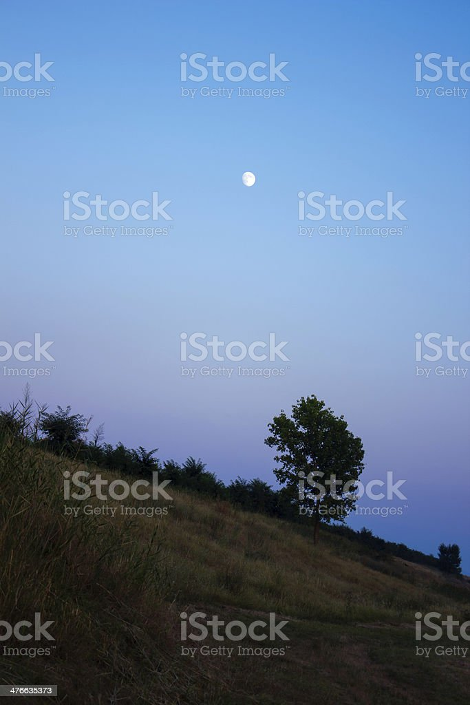 Lonely autumn  tree on a hill royalty-free stock photo