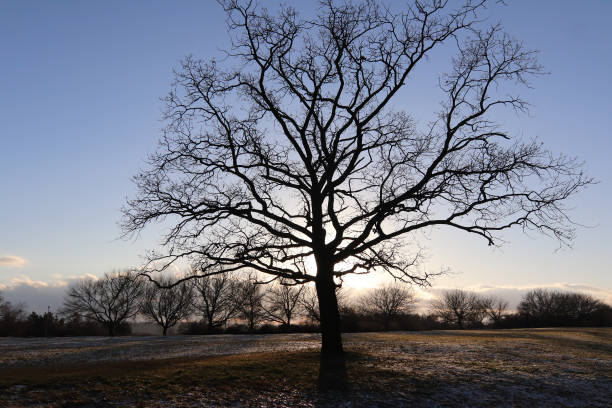 Lonely bare tree in winter landscape stock photo