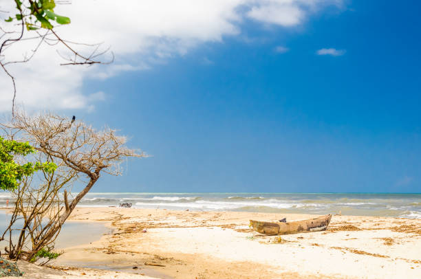 Lonely beach by palomino in Colombia View on Lonely beach by palomino in Colombia palomino stock pictures, royalty-free photos & images