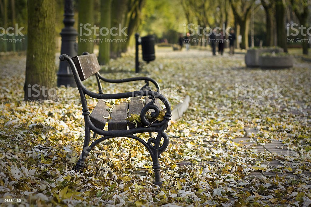 Lonely bench in a park royalty-free stock photo