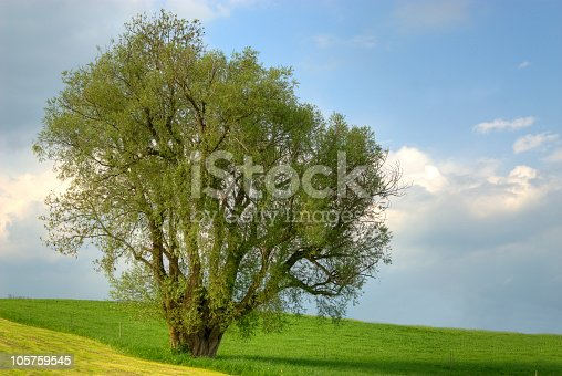 istock Lonely big Tree HDR 105759545