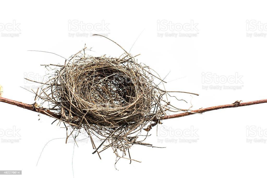 Lonely Bird Nest. stock photo