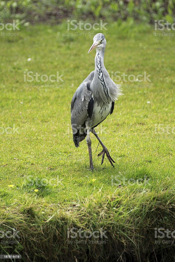 Lonely bird royalty-free stock photo