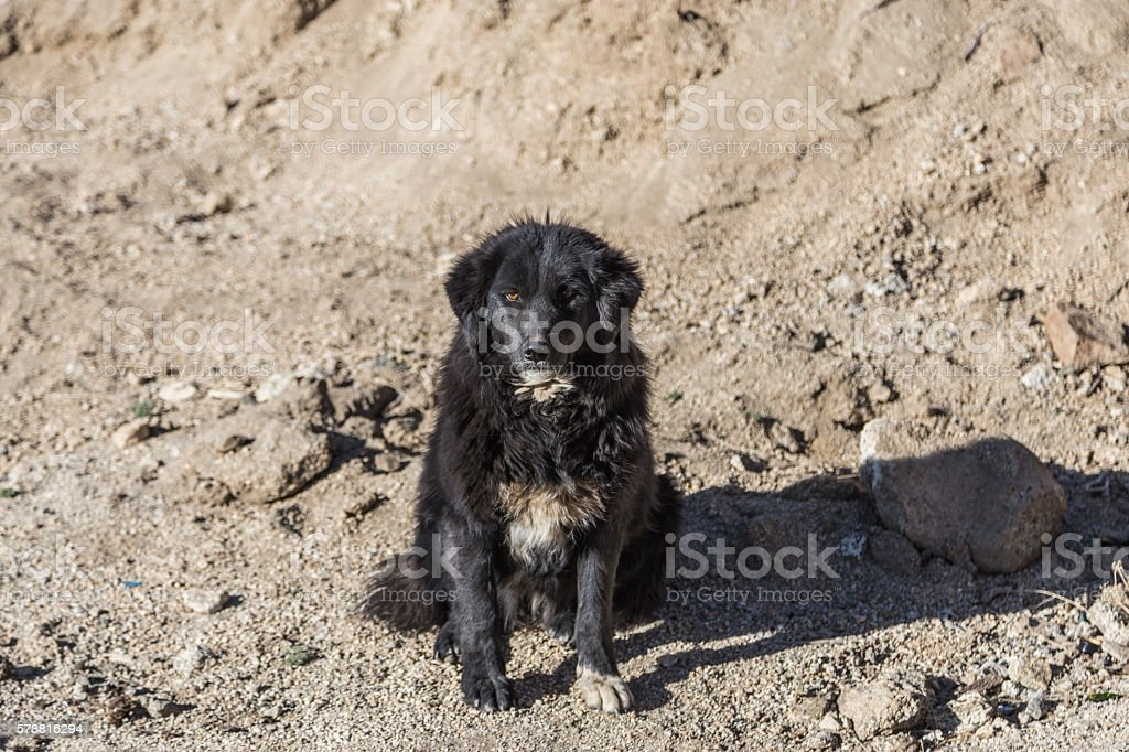 Lonely black dog with sad eyes sitting stock photo