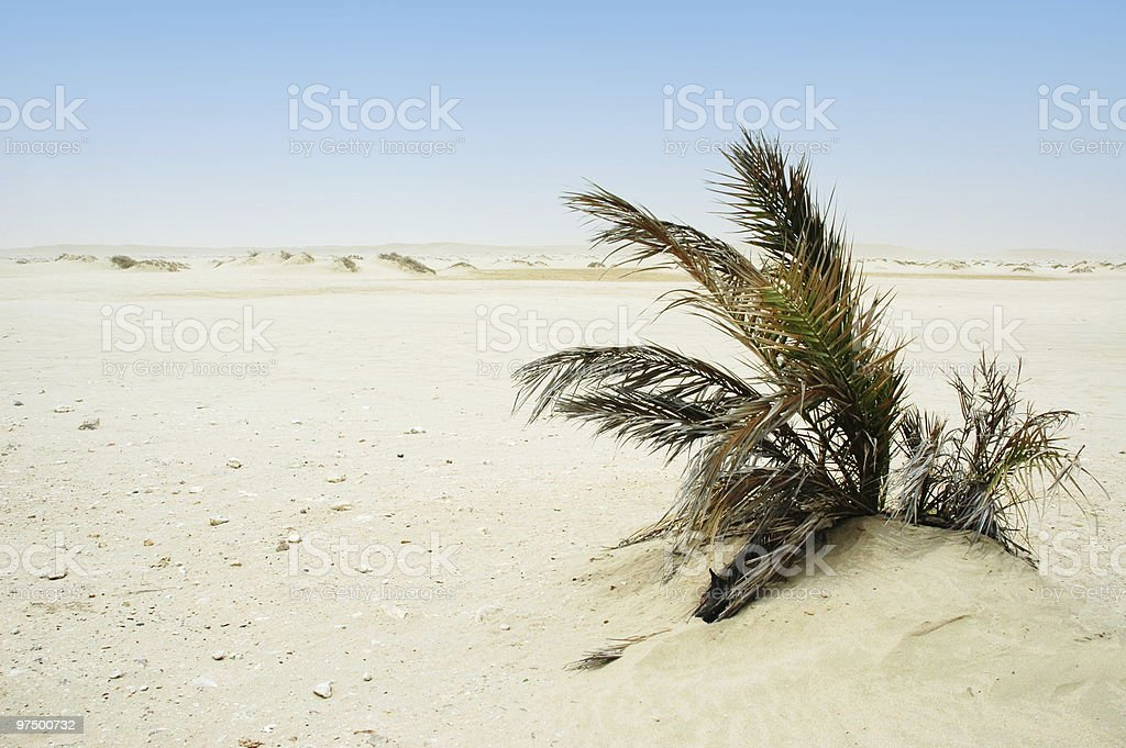 Lonely bush in a desert royalty-free stock photo