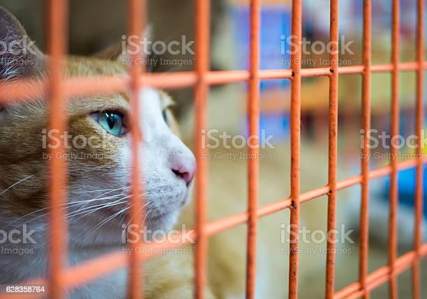 Lonely cat in cage picture id628358764?b=1&k=6&m=628358764&s=612x612&h=8ge3zrrfi3qnd9lgkhwyr86hd4js5gov2 xqmp50tu0=