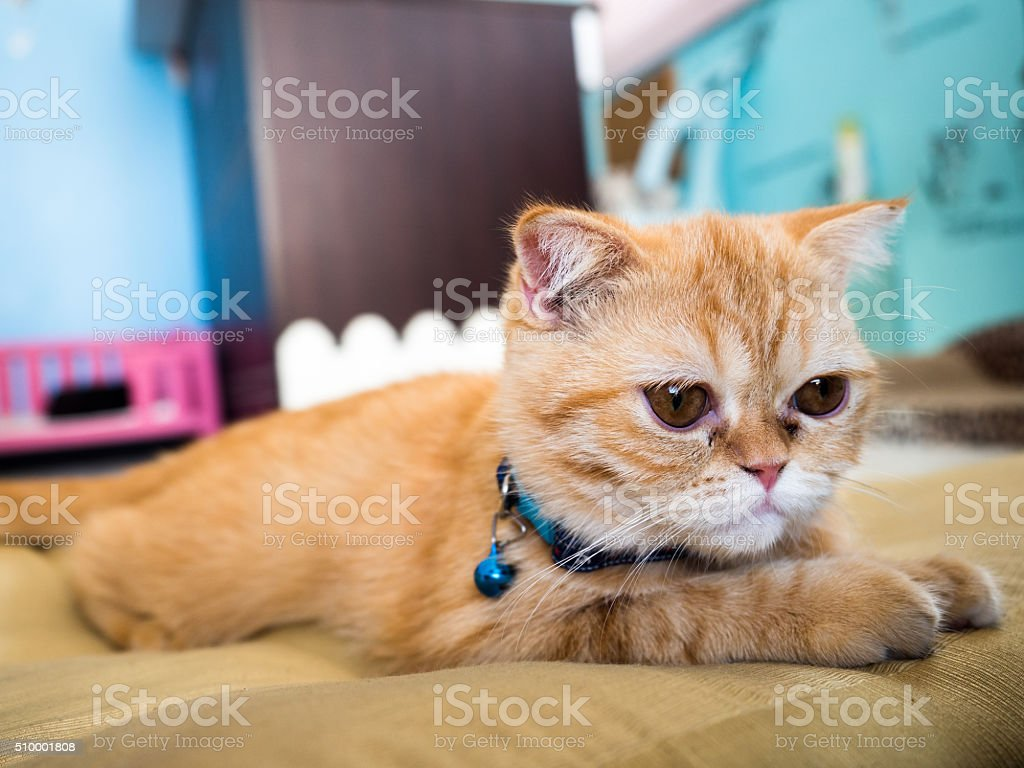 lonely cat in colorful blur background,select focus royalty-free stock photo