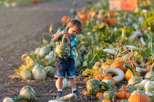 Lonely Child boy picking up a gourd at a pumpkin patch during times of pandemic