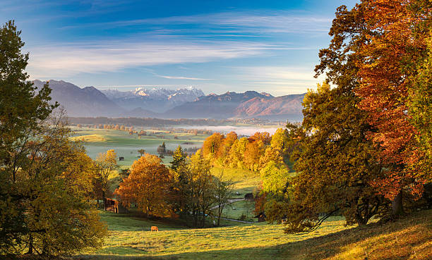 Lonely cow in autumn at Riegsee with Zugspitze in Background View over Riegsee with Zugspitze in Background at Autumn bavarian alps stock pictures, royalty-free photos & images