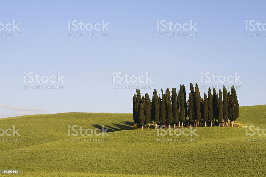 Lonely Cpress Trees Orcia Valley royalty-free stock photo